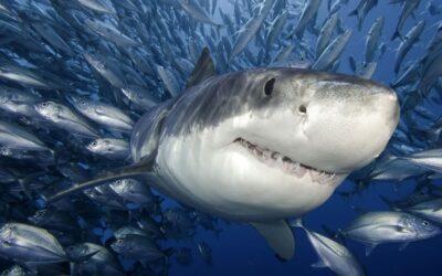 ¡Emprendedora! ¿Estás en un estanque de tiburones?